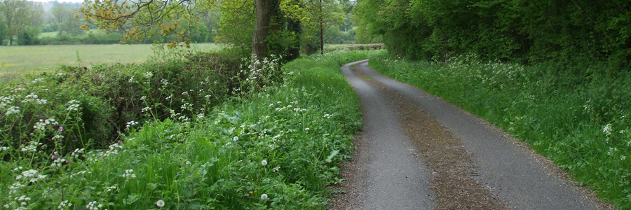 Down the lane to Corsley Mill